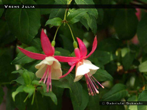 Vrens Julia