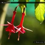 Vrens Mantilla