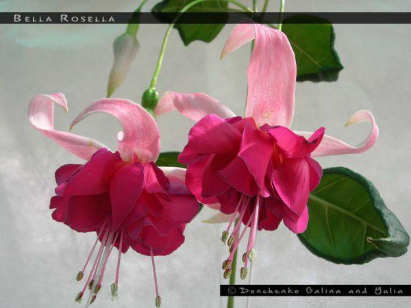 Bella Rosella
