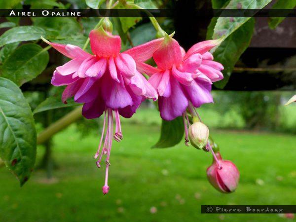 Airel Opaline