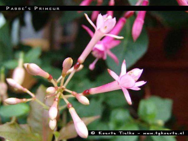 Pabbe's Primeur